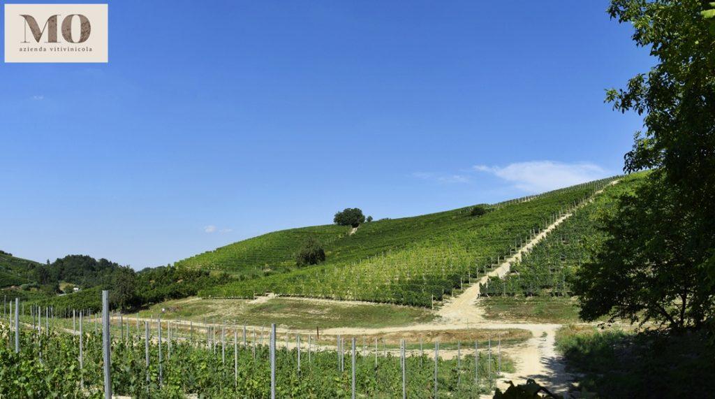 Weinberge der Azienda Vitivinicola Mo
