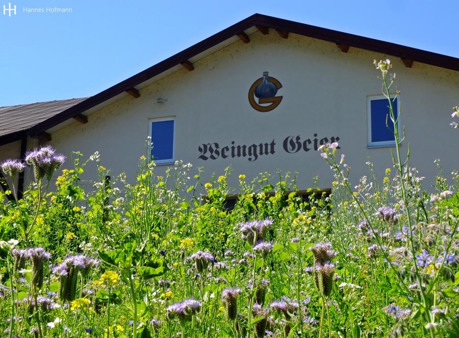 Weingut Andreas Geier - Königheim - Taubertal